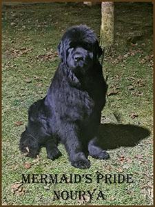 Mermaid's Pride Nourya
