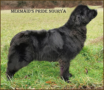 terre neuve mermaids pride nourya 040120203b