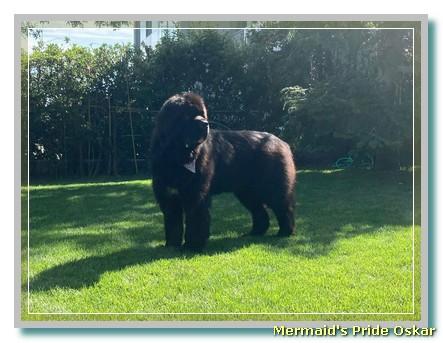 maybelle-little bear's garamante
